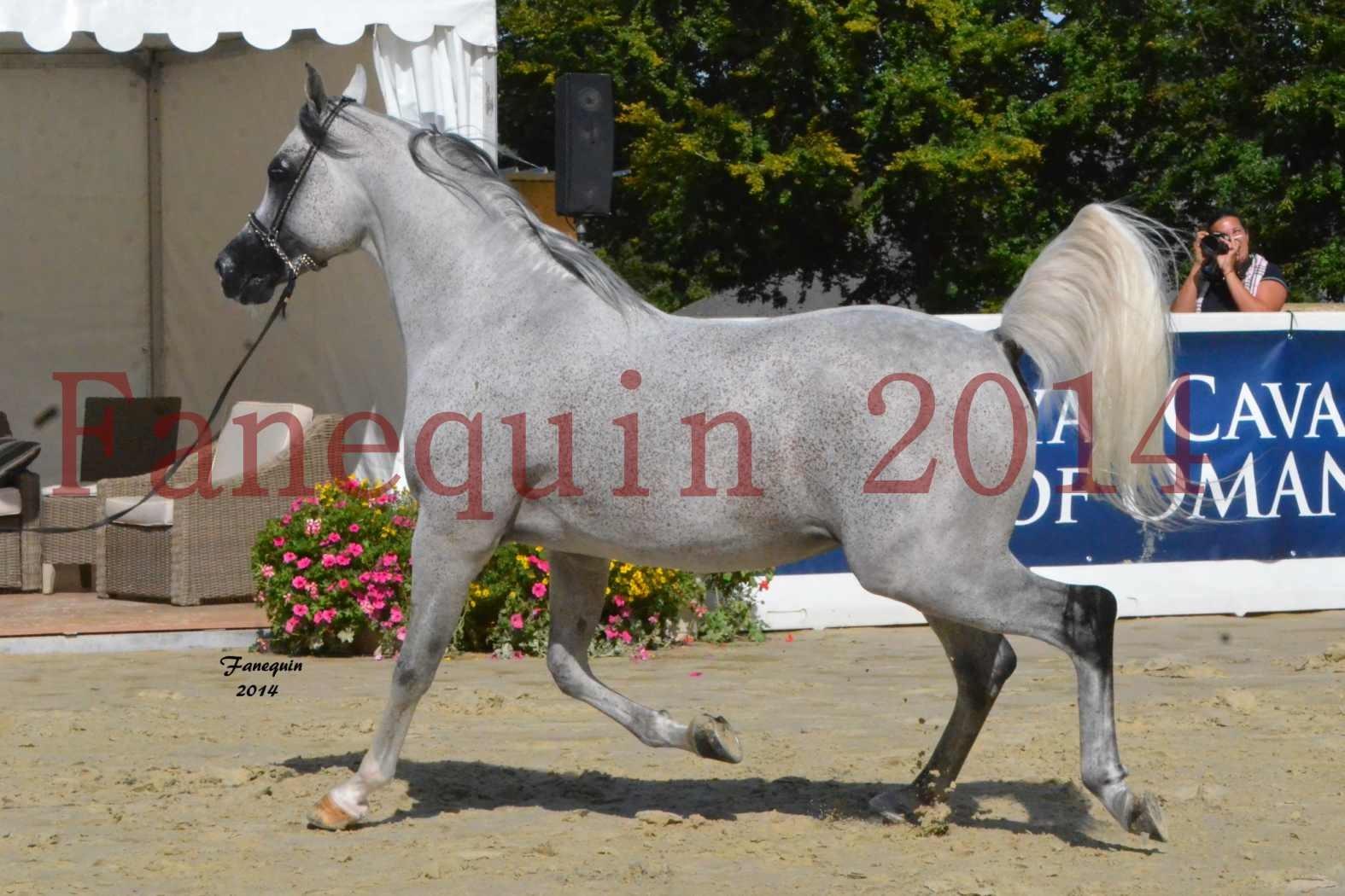 CHAMPIONNAT DE FRANCE  2014 A POMPADOUR - Notre Sélection - SHEYK DE GARGASSAN - 03