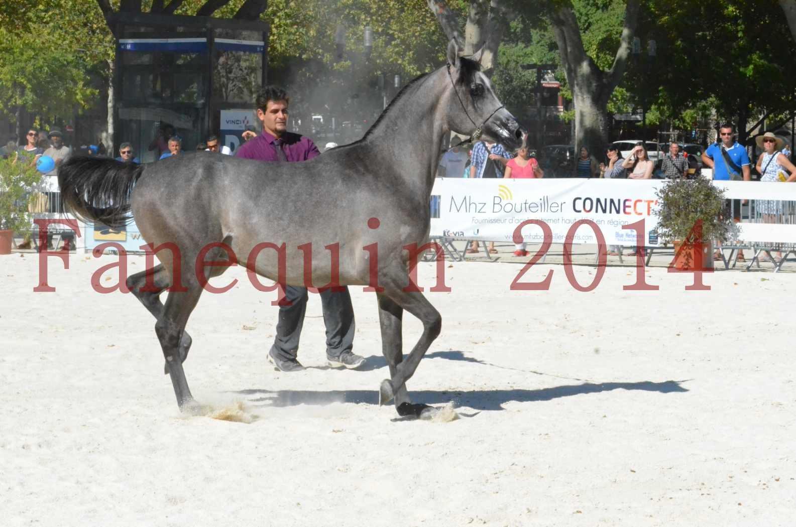 Concours National de Nîmes de chevaux ARABES 2014 - Championnat - JOSEPH'S BOUZIOLS - S 11