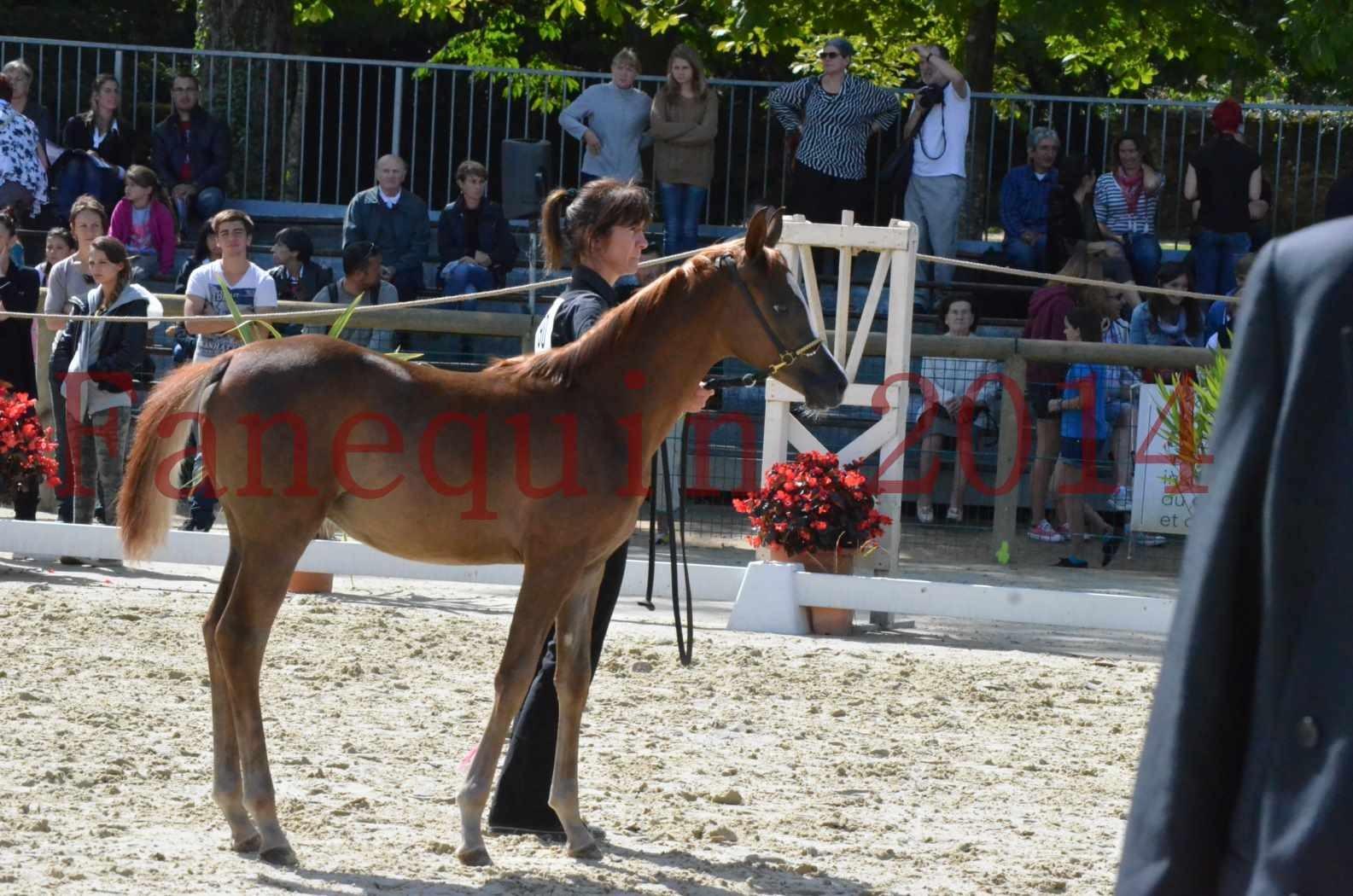 CHAMPIONNAT DE FRANCE 2014 A POMPADOUR - Championnat - TSAR KENZA - 35