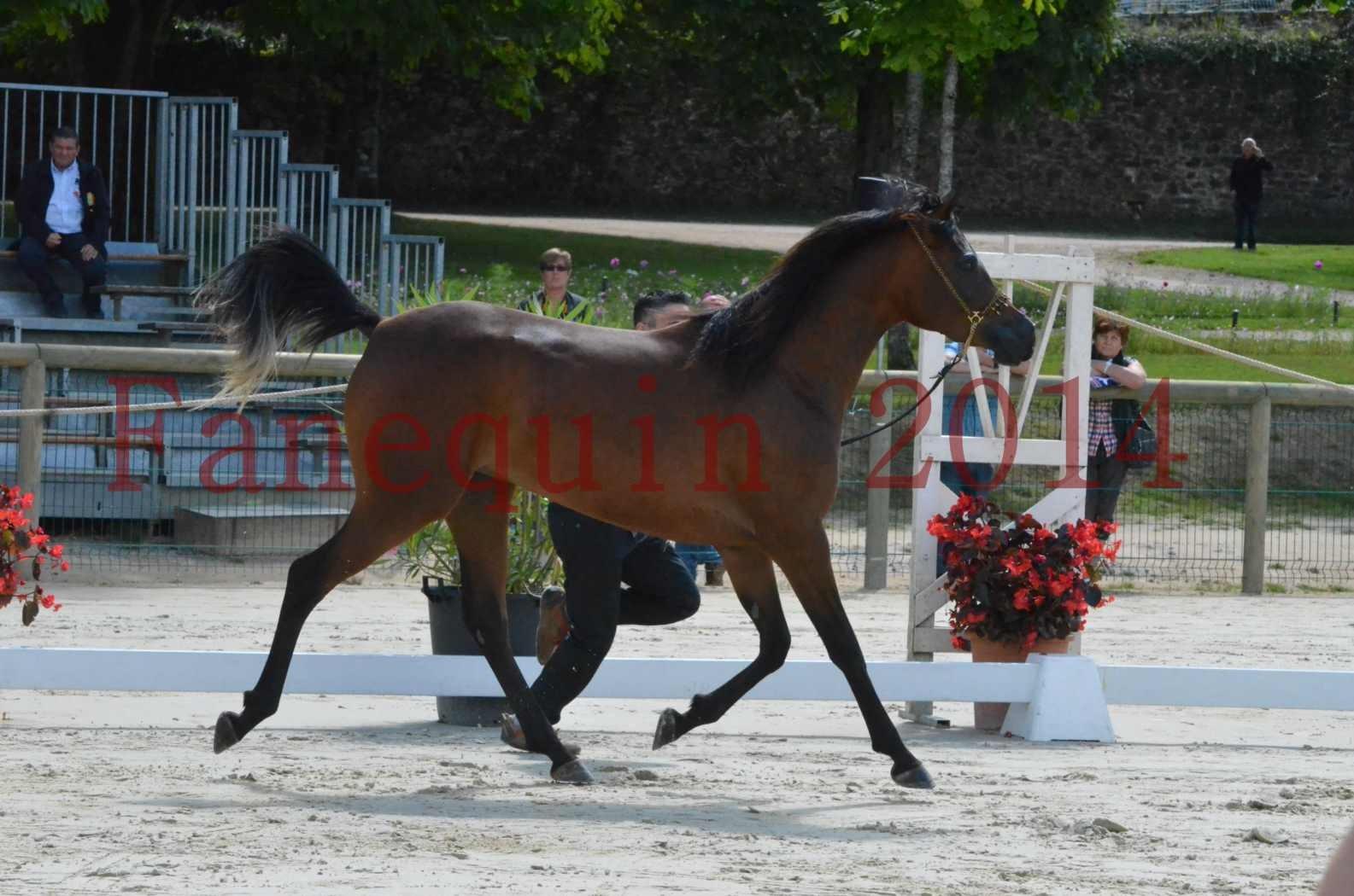 Championnat de FRANCE 2014 - Amateurs - KAL'ELLE D'ELHORIA - 48
