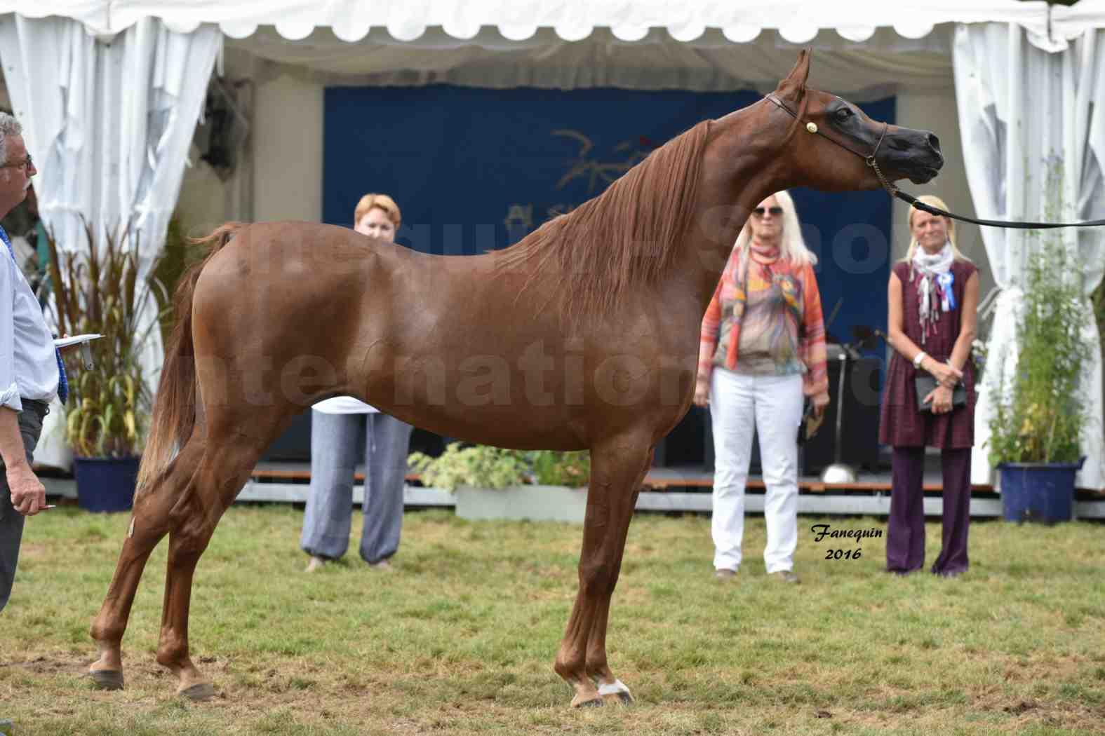 International Arabian Horse Show B de VICHY 2016 - PEARL DE DJOON - Notre Sélection - 41