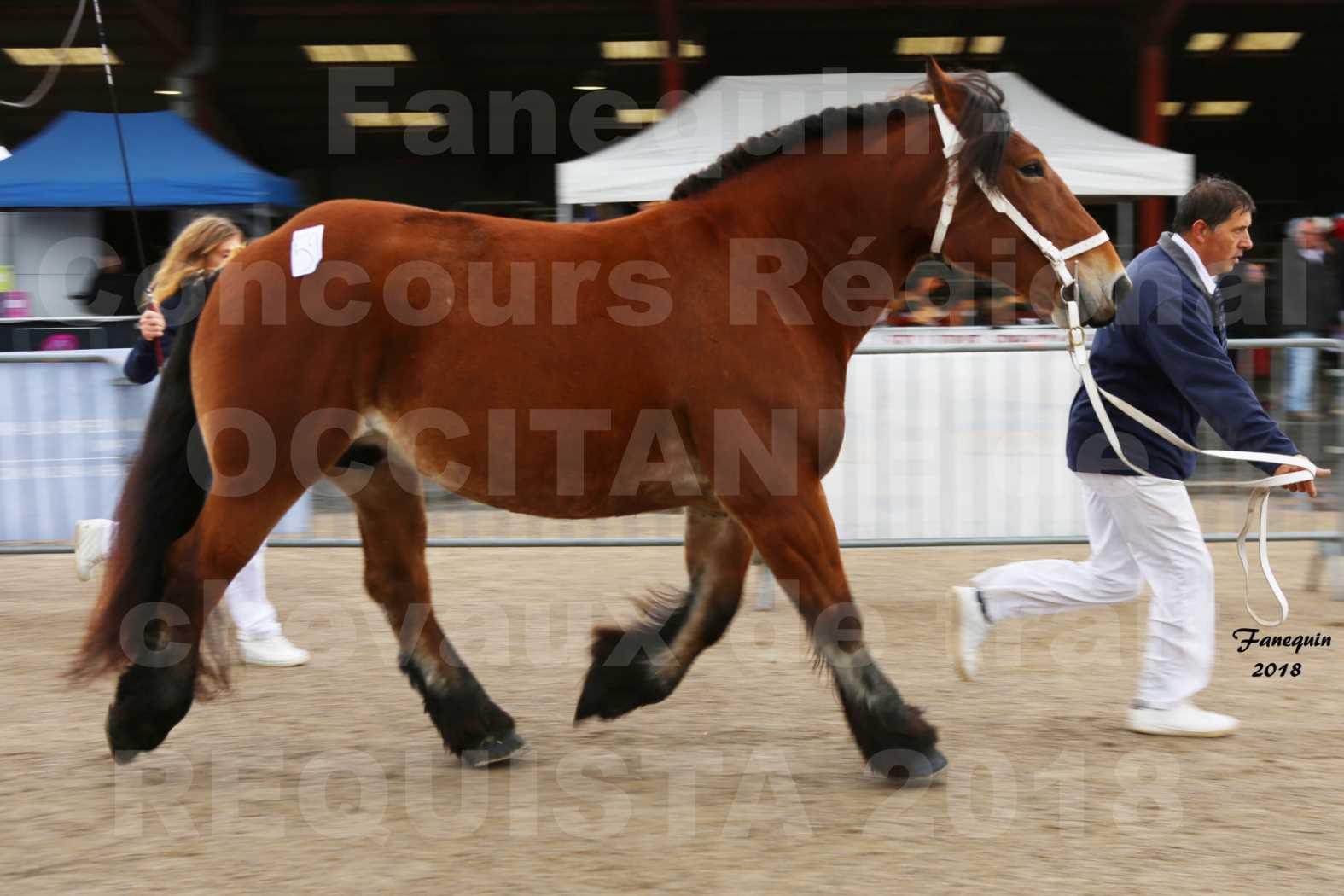 Concours Régional OCCITANIE de chevaux de traits à REQUISTA - COMETE DE GRILLOLES - 6