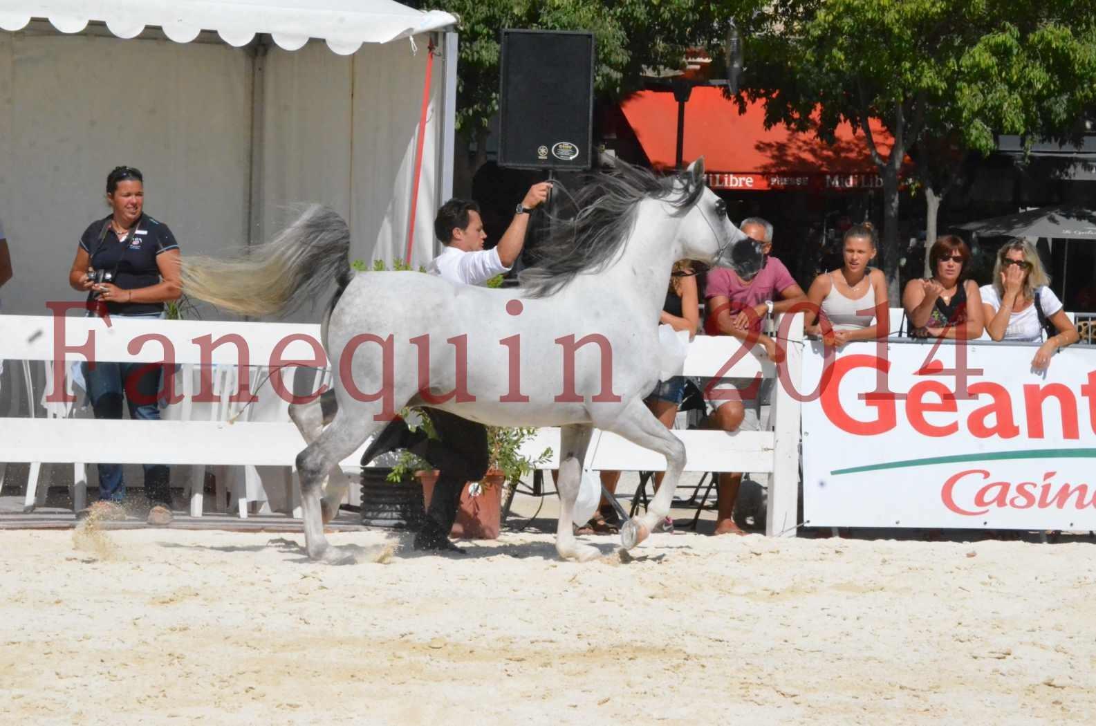 Concours National de Nîmes de chevaux ARABES 2014 - Sélection - SHAOLIN DE NEDJAIA - 37