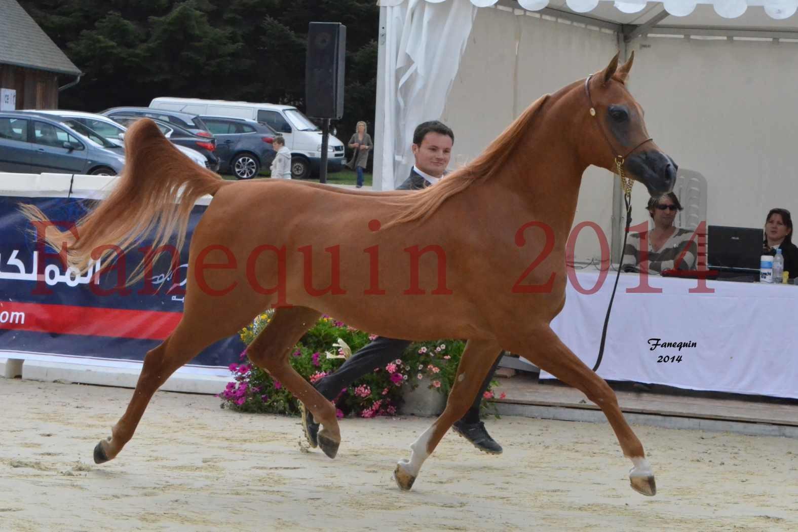 CHAMPIONNAT DE FRANCE 2014 A POMPADOUR - Notre Sélection - LUTFINAH JA - 11