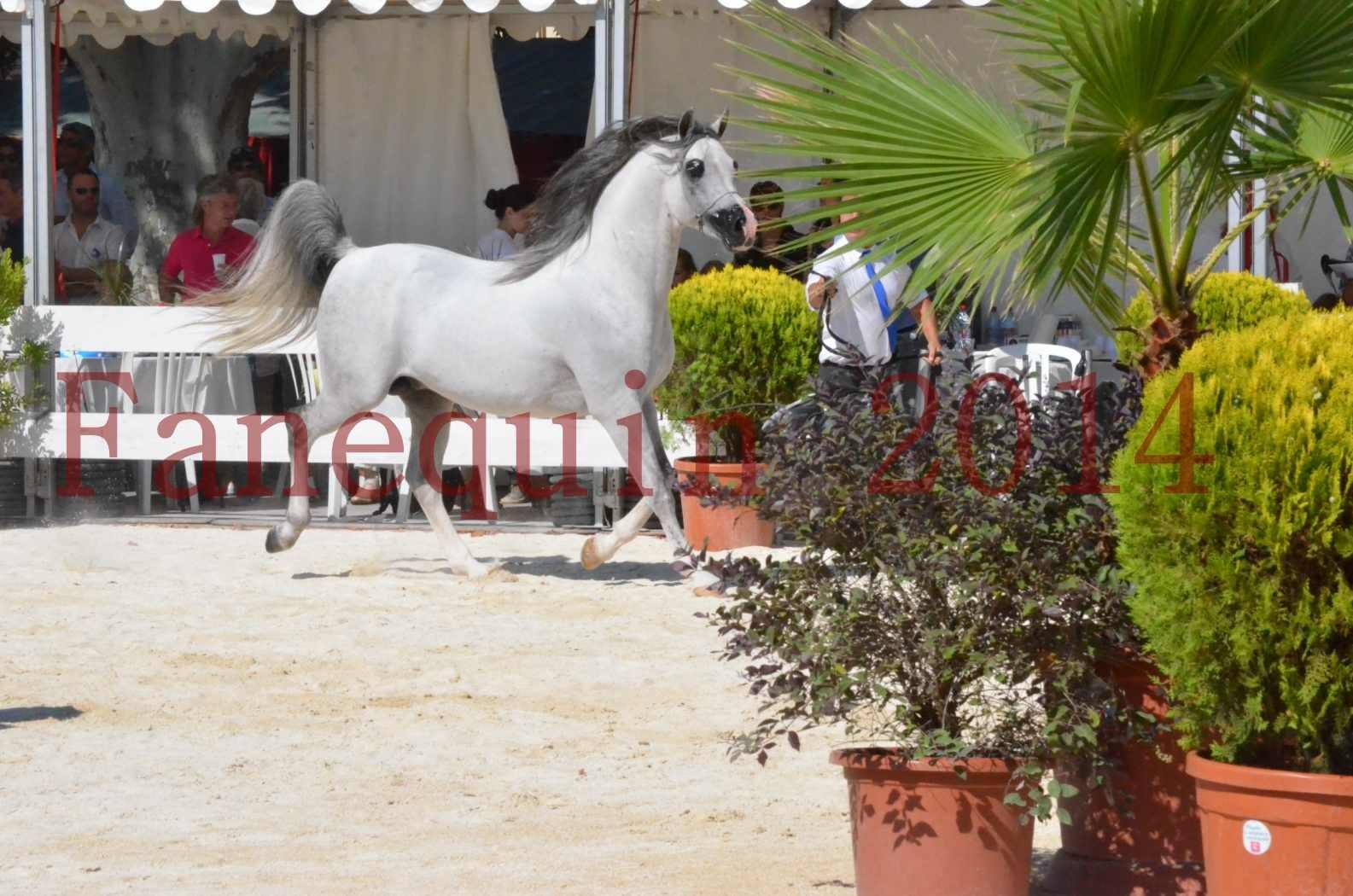 Concours National de Nîmes de chevaux ARABES 2014 - Sélection - SHAOLIN DE NEDJAIA - 11