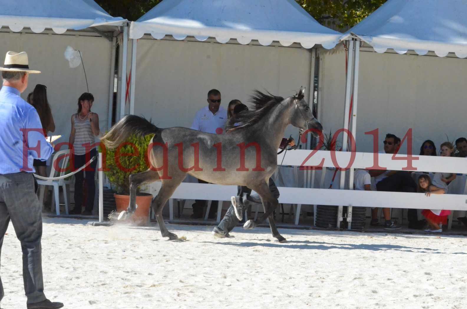 Concours National de Nîmes de chevaux ARABES 2014 - Championnat - JOSEPH'S BOUZIOLS - S 05