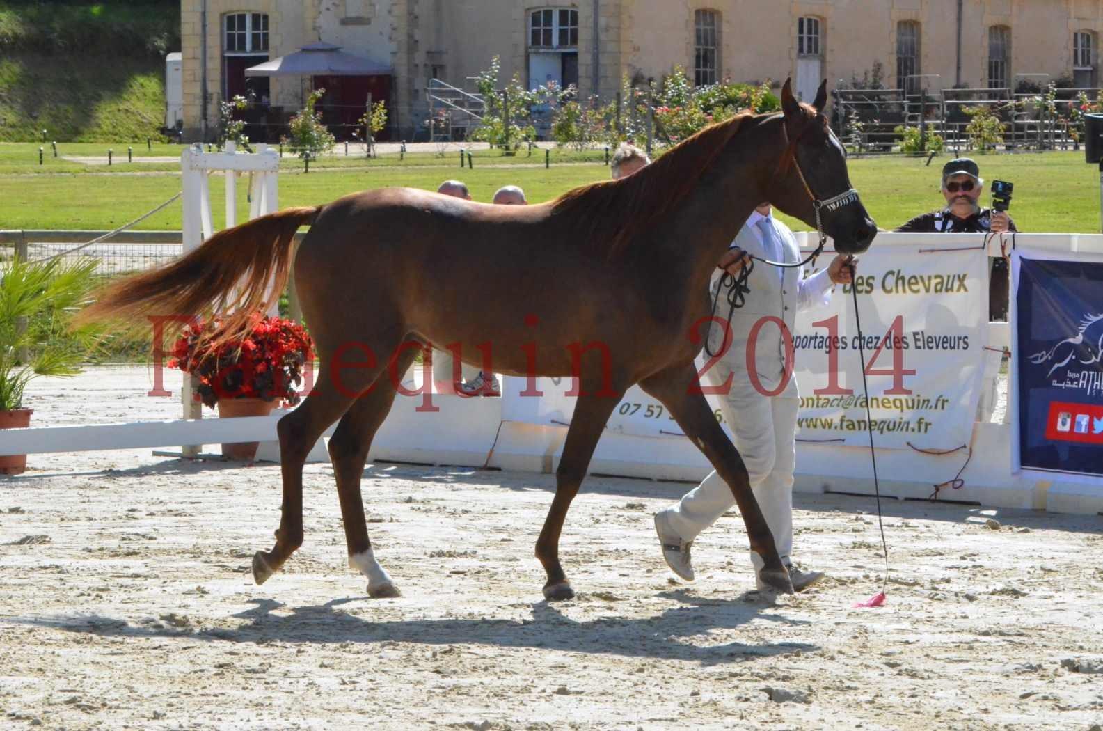 Championnat de FRANCE 2014 - Amateurs - LAMAL - 22