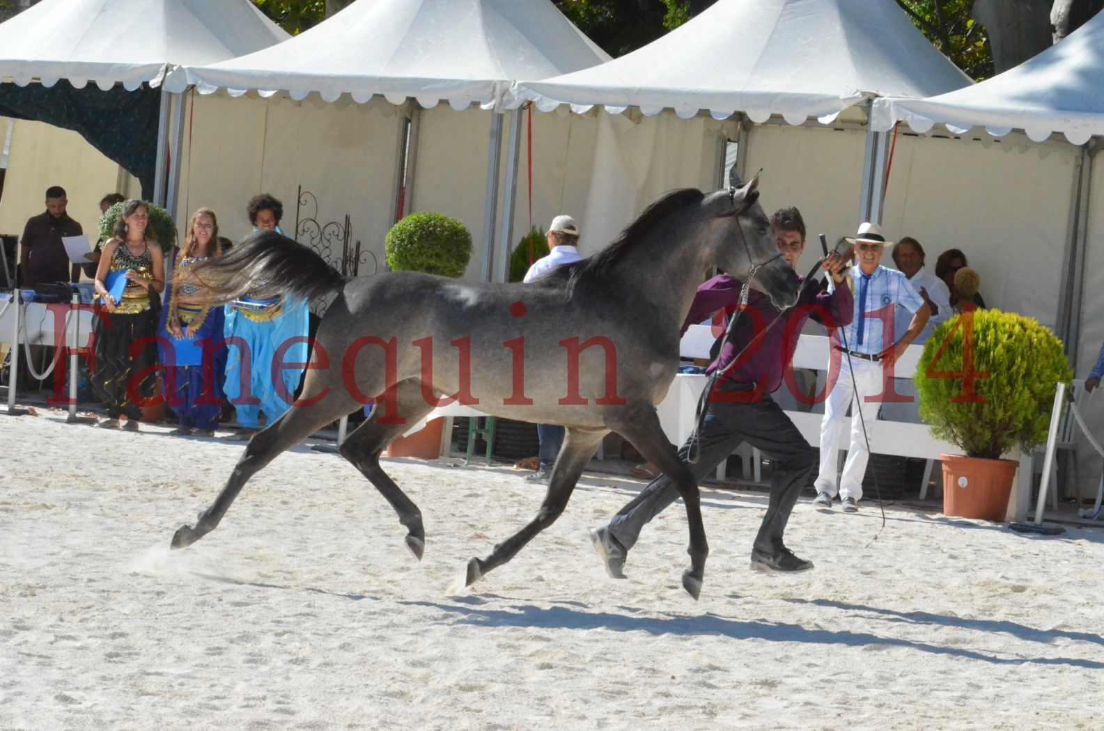 Concours National de Nîmes de chevaux ARABES 2014 - Championnat - JOSEPH'S BOUZIOLS - S 03