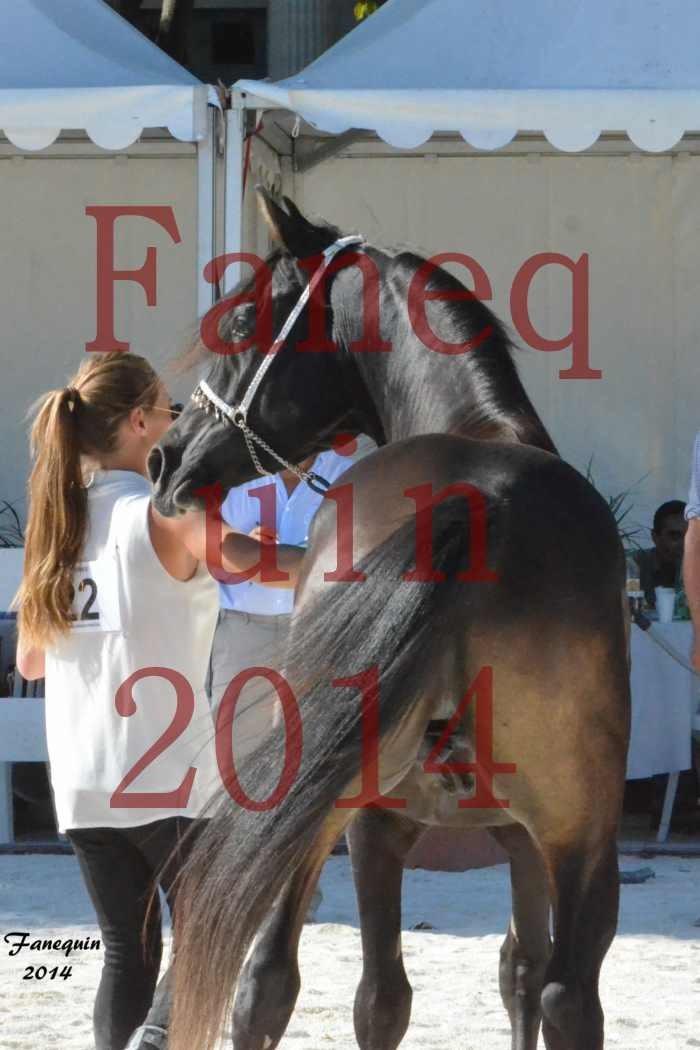Concours National de Nîmes de chevaux ARABES 2014 - Notre Sélection - Portraits - BALTYK DE CHAUMONT - 8