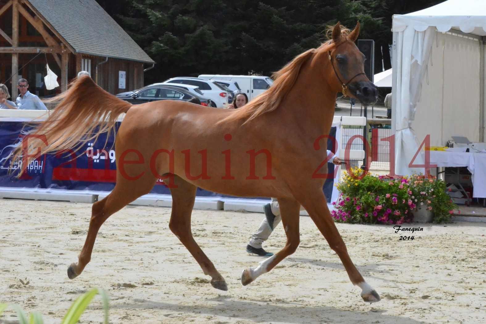 CHAMPIONNAT DE FRANCE 2014 A POMPADOUR - Notre Sélection - LUTFINAH JA - 25