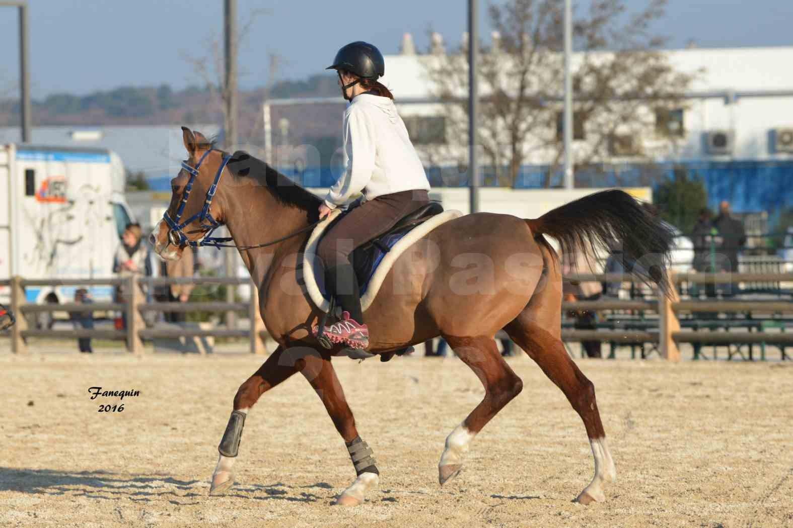 Cheval Passion 2016 - Présentation extérieure de chevaux Arabes montés - 09