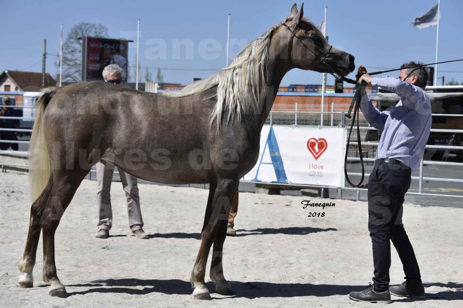 Concours d'élevage de Chevaux Arabes - Demi Sang Arabes - Anglo Arabes - ALBI les 6 & 7 Avril 2018 - DAENERYS DE LAFON - Notre Sélection - 06
