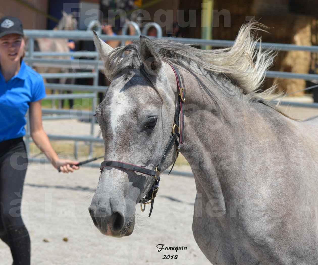 Concours d'Elevage de chevaux Arabes  le 27 juin 2018 à la BOISSIERE - GAZAK D'AURIERES - 1
