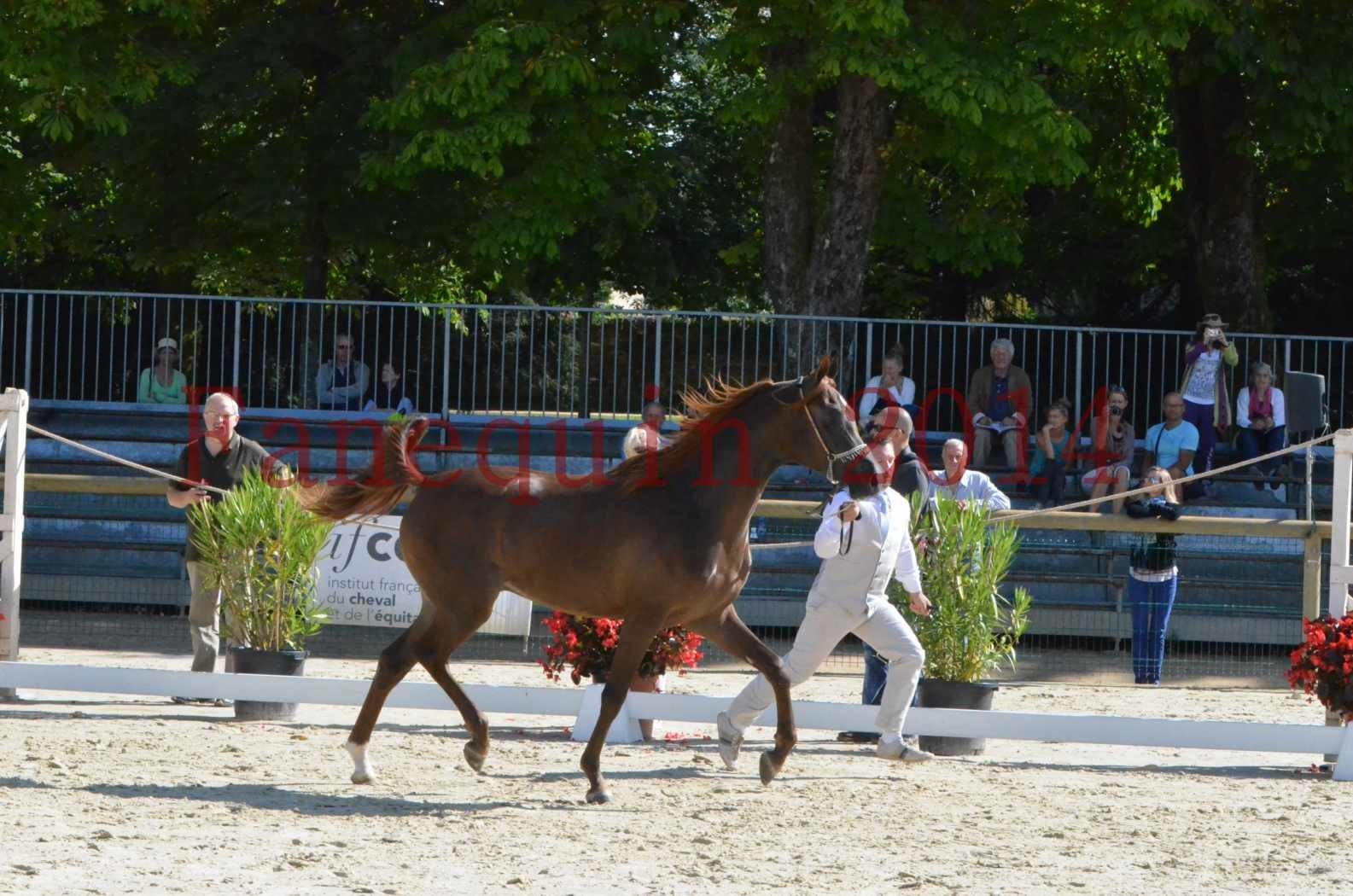 Championnat de FRANCE 2014 - Amateurs - LAMAL - 04
