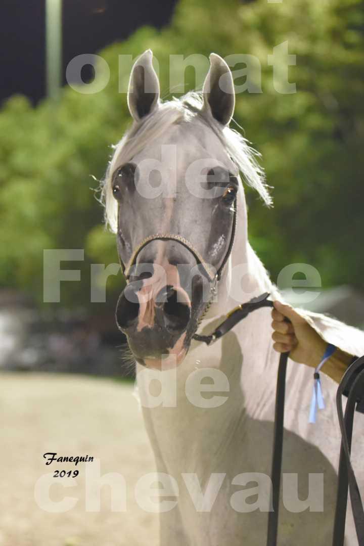 Championnat de France des chevaux Arabes en 2019 à VICHY - SHAMS EL ASHIRAF - Portraits - 5