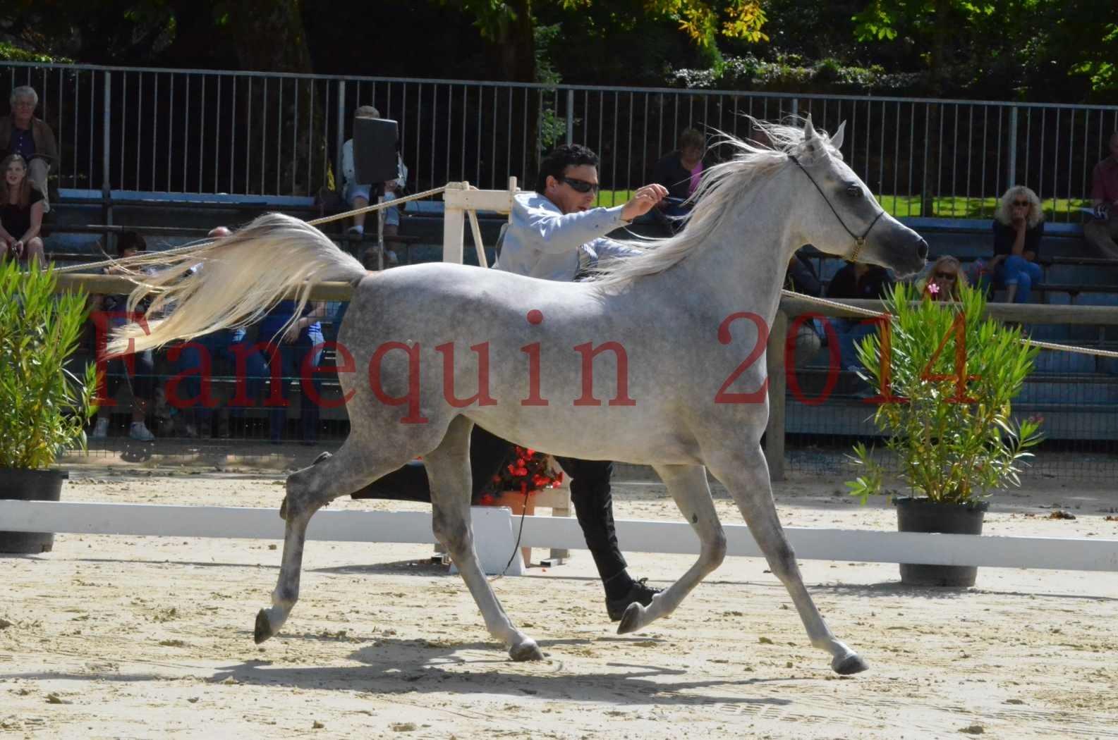 Championnat de FRANCE 2014 - Amateurs - VOLODIA DE LAFON - 026