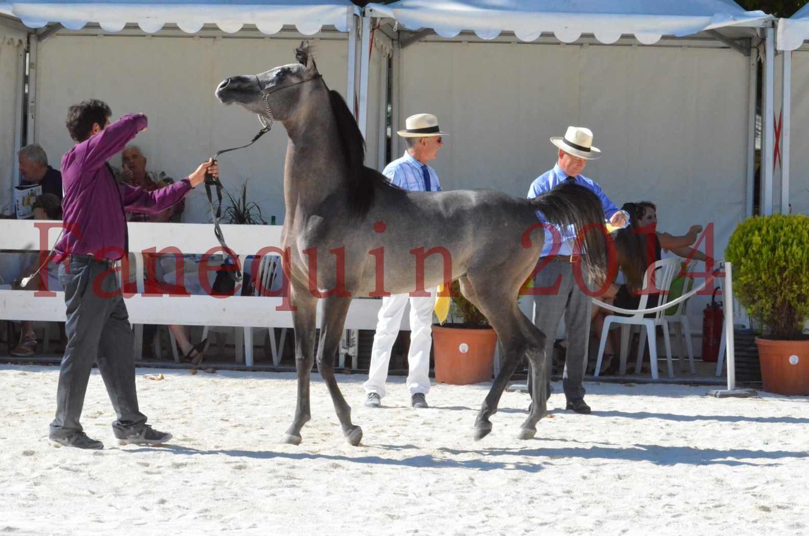 Concours National de Nîmes de chevaux ARABES 2014 - Championnat - JOSEPH'S BOUZIOLS - S 19