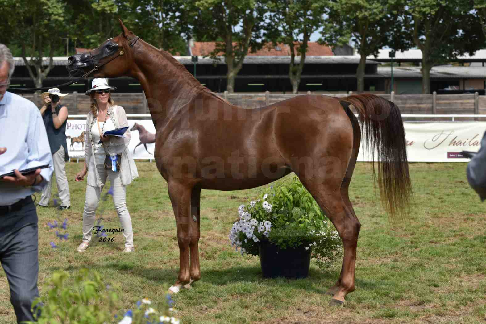 International Arabian Horse Show B de VICHY 2016 - PEARL DE DJOON - Notre Sélection - 42