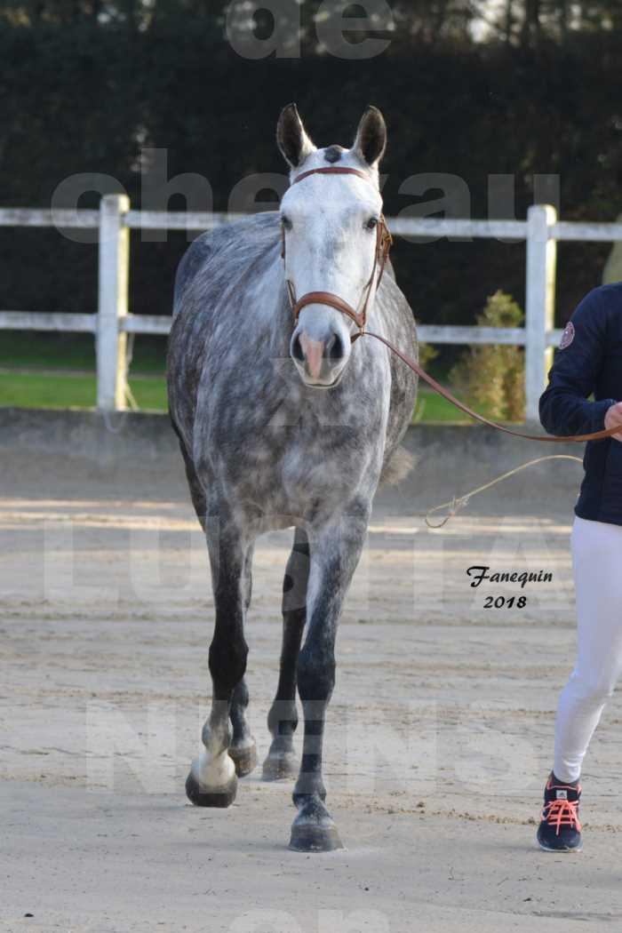 Confirmation de chevaux LUSITANIENS aux Haras d'UZES Novembre 2018 - JANIA SAINT SAUVEUR - 1