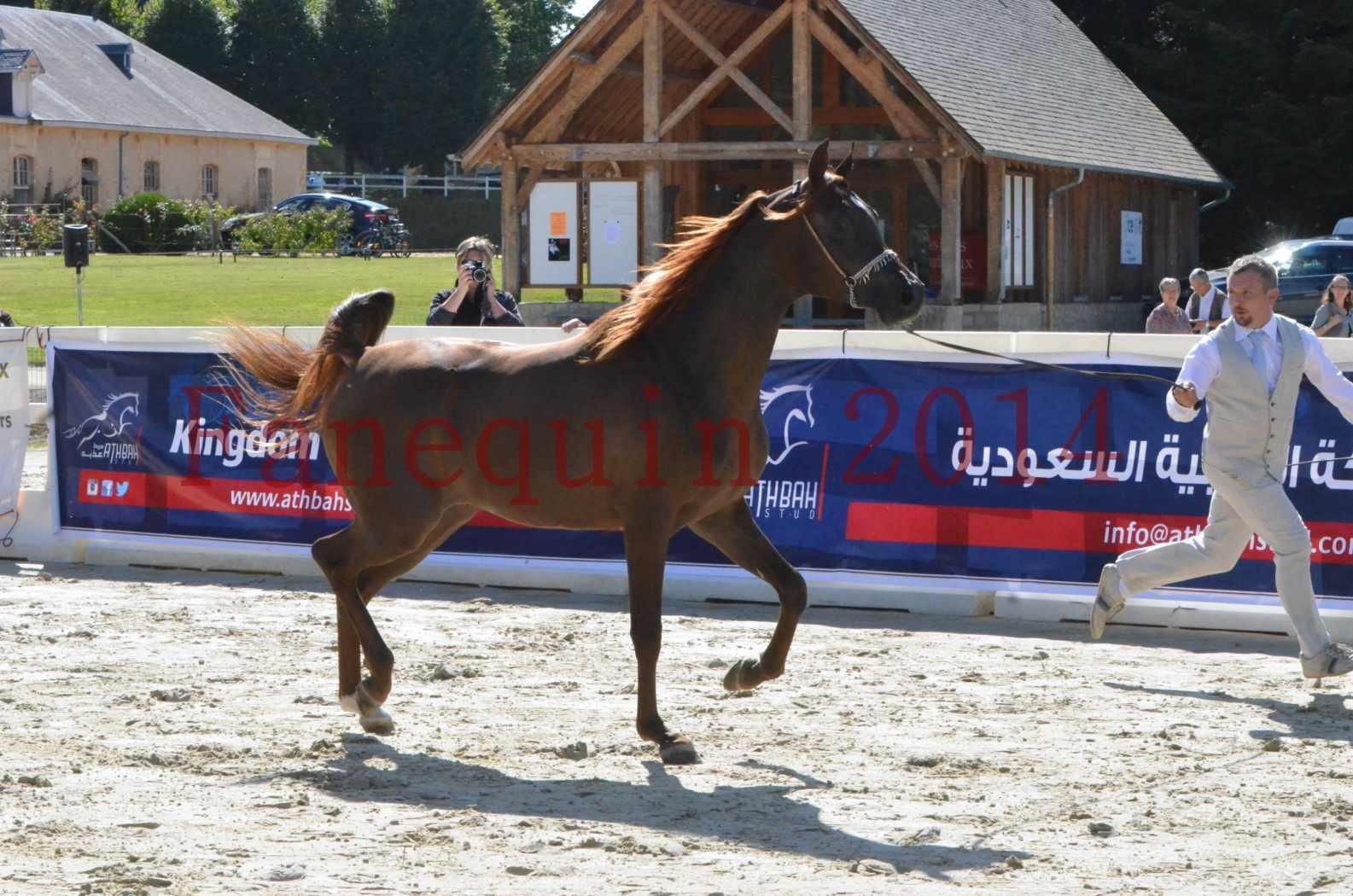 Championnat de FRANCE 2014 - Amateurs - LAMAL - 08