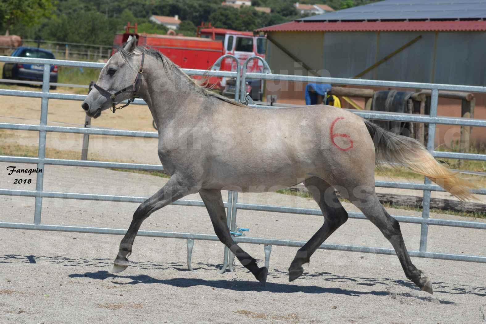 Concours d'Elevage de chevaux Arabes  le 27 juin 2018 à la BOISSIERE - GAZAK D'AURIERES - 04