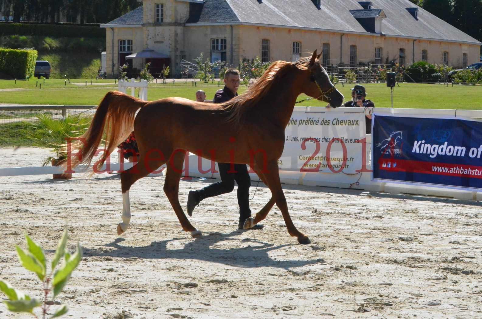 Championnat de FRANCE 2014 - Amateurs - SELECTO IBN SAMAWI - 007