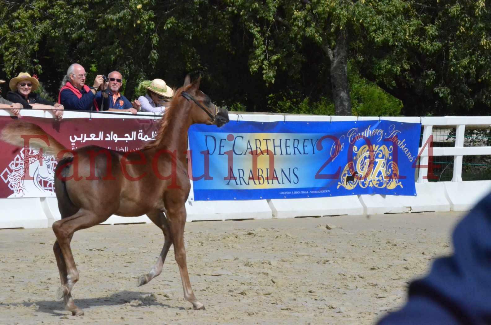 CHAMPIONNAT DE FRANCE 2014 A POMPADOUR - Championnat - TSAR KENZA - 04