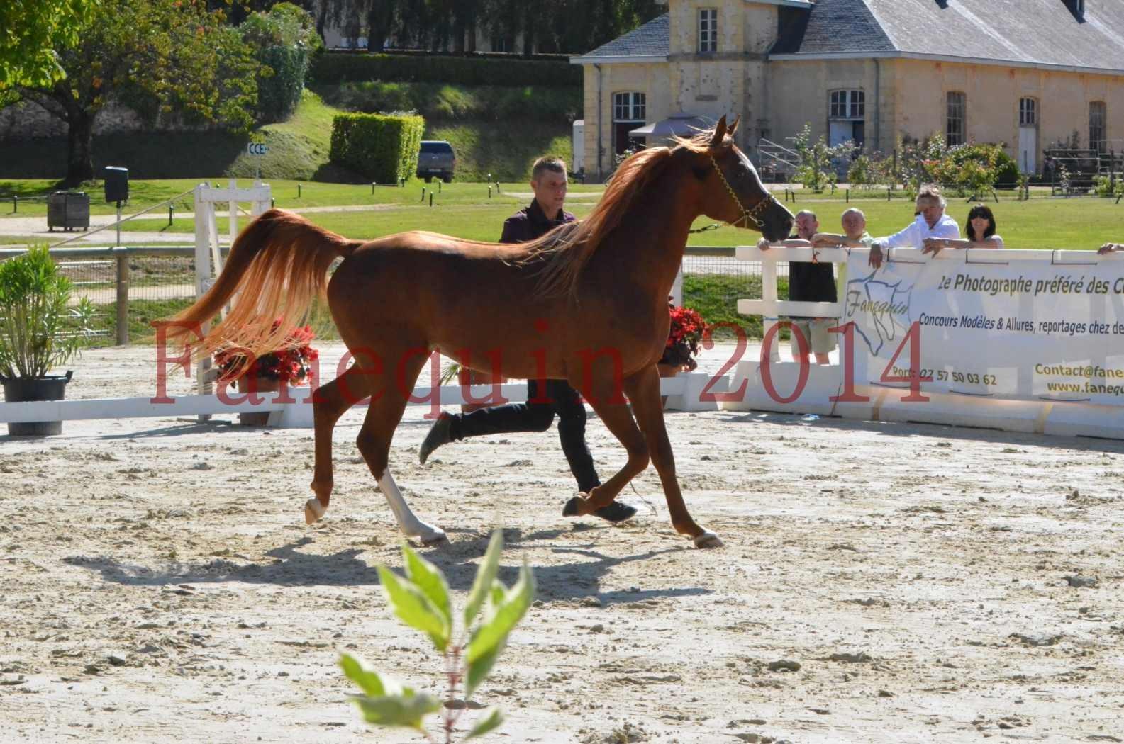 Championnat de FRANCE 2014 - Amateurs - SELECTO IBN SAMAWI - 005