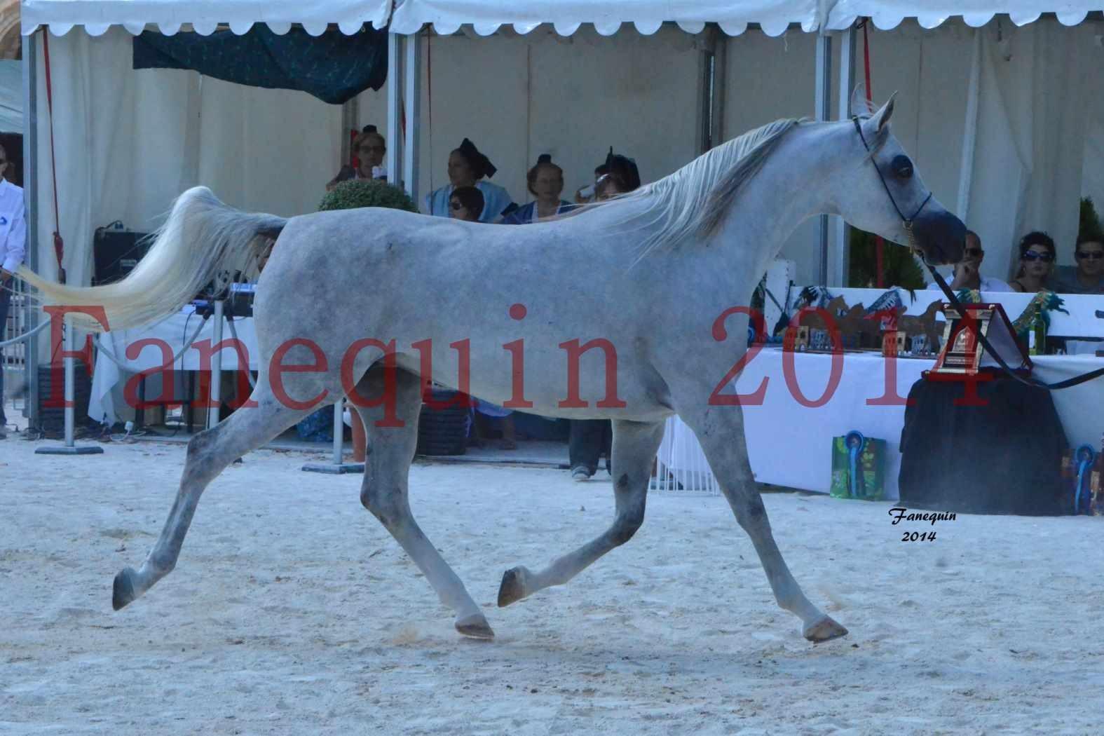 Concours National de Nîmes de chevaux ARABES 2014 - Notre Sélection - ELLESTERA - 02