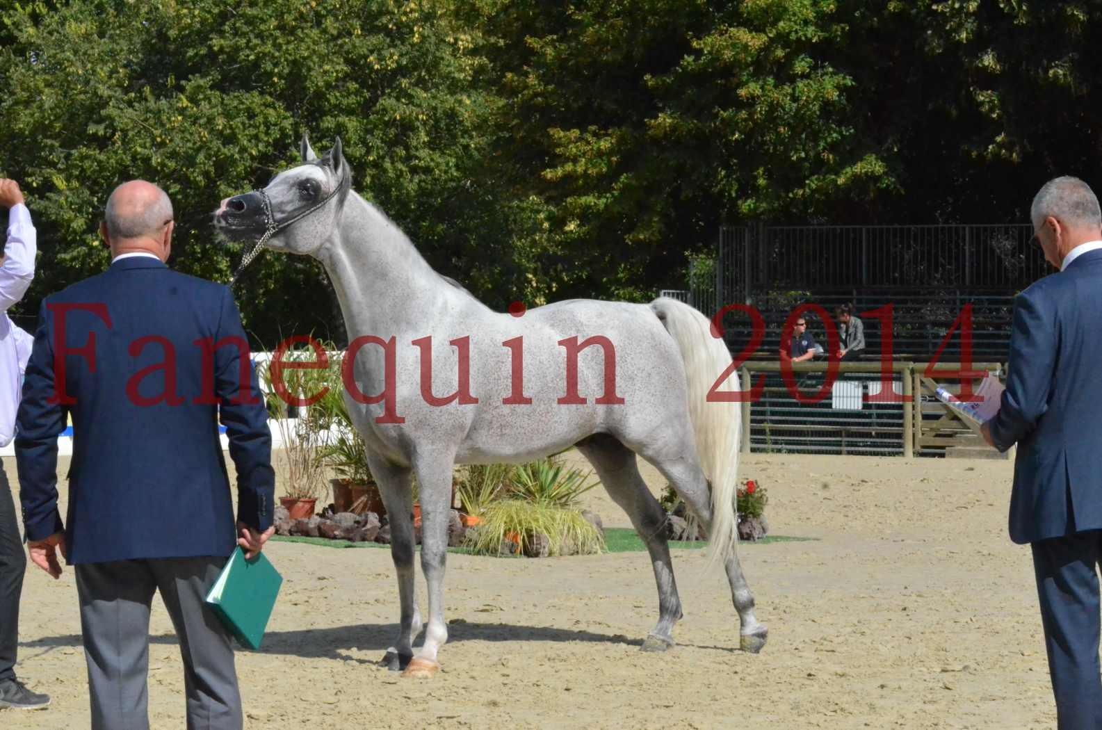 CHAMPIONNAT DE FRANCE  2014 A POMPADOUR - Sélection - SHEYK DE GARGASSAN - 18