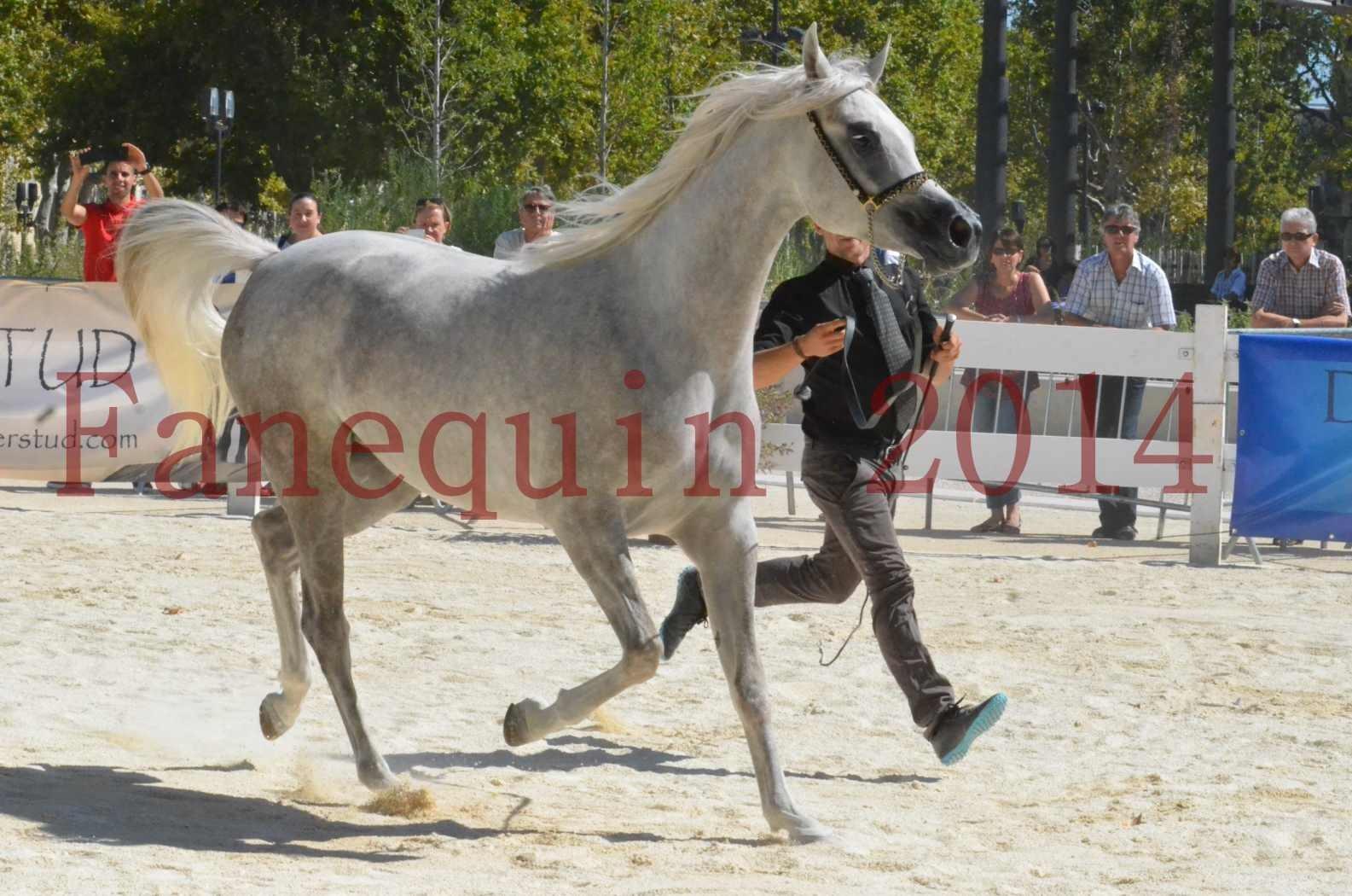 Concours national de Nîmes 2014 - Sélection  - VOLODIA DE LAFON - 20