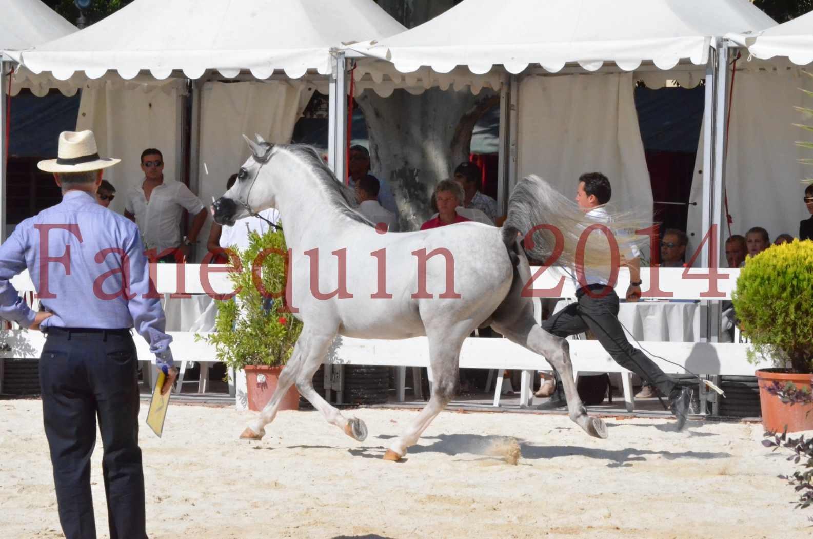 Concours National de Nîmes de chevaux ARABES 2014 - Sélection - SHAOLIN DE NEDJAIA - 10
