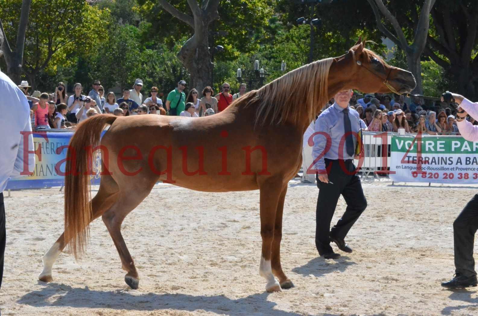 Concours National de Nîmes de chevaux ARABES 2014 - Championnat - MASSAI DE BARREL - 41