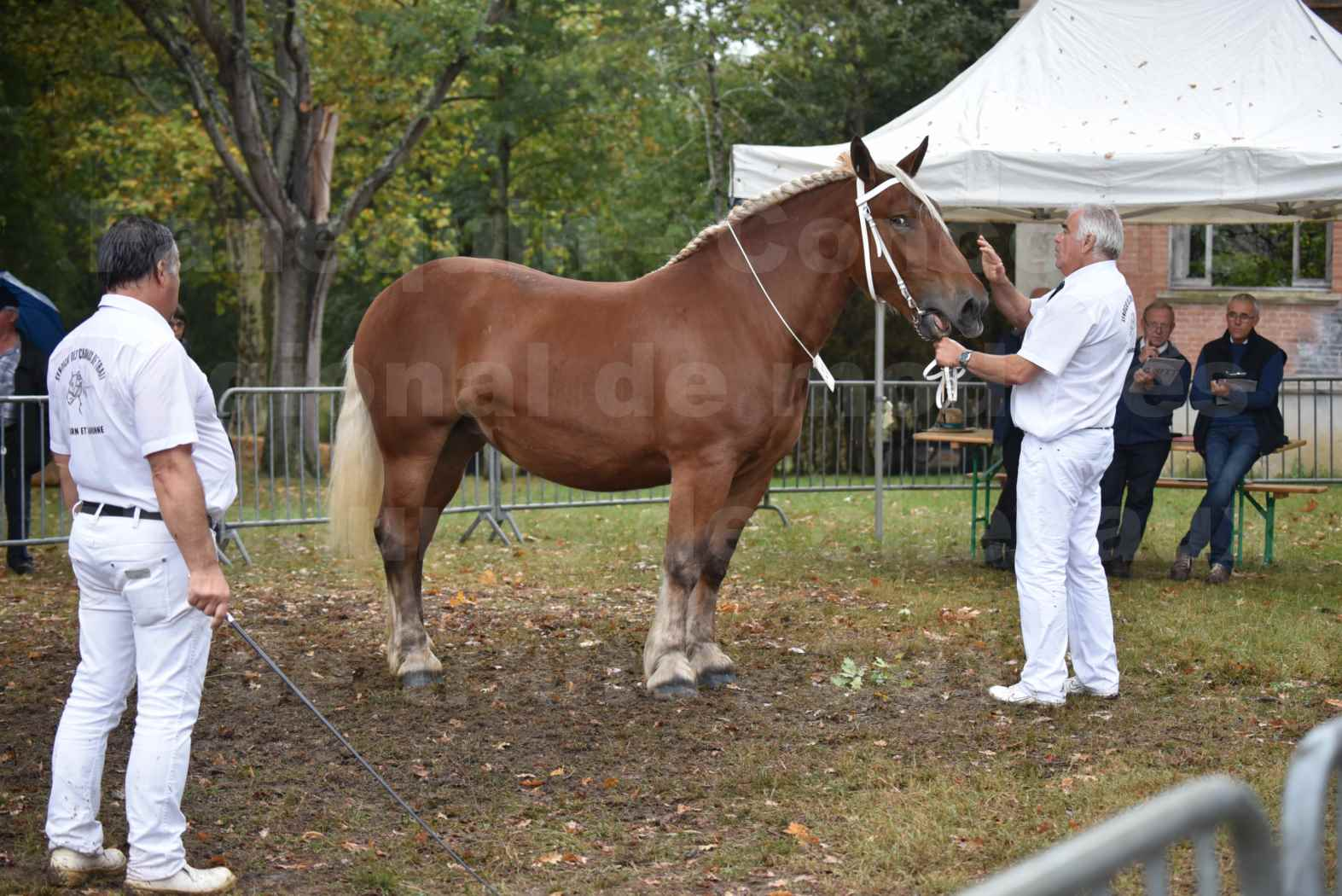 Concours Régional de chevaux de traits en 2017 - Trait COMTOIS - ELLIA DE FENEYROLS - 05