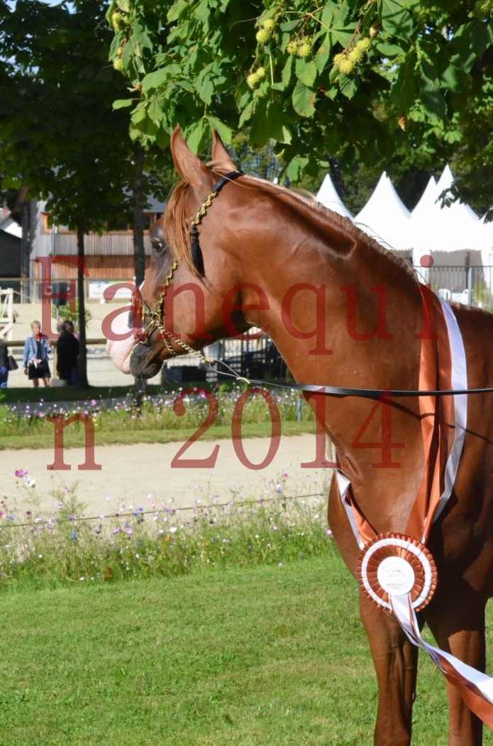 Championnat de FRANCE 2014 - Amateurs - SELECTO IBN SAMAWI - 200