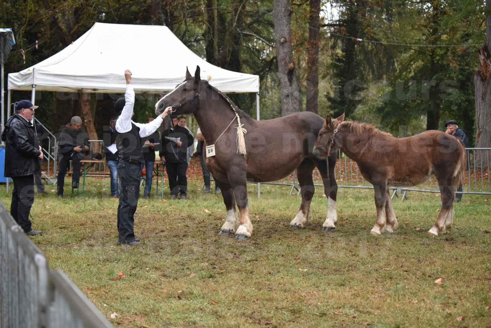 Concours Régional de chevaux de traits en 2017 - Jument & Poulain Trait BRETON - DIANE 18 - 06