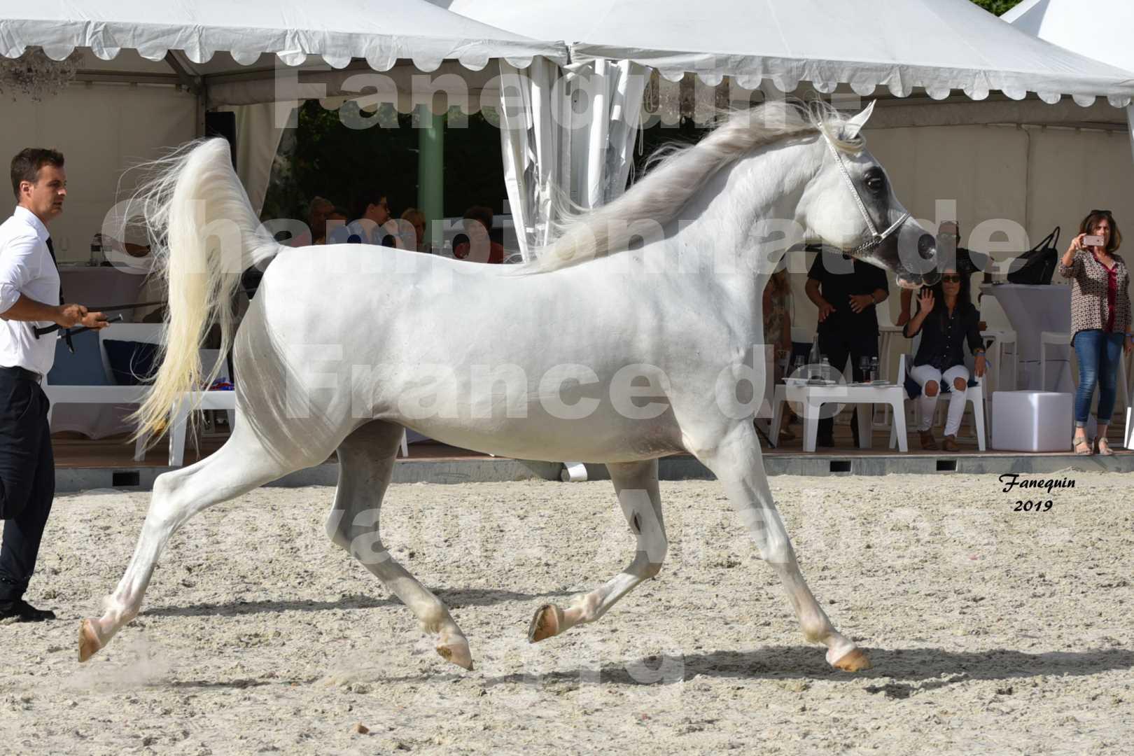 Championnat de France des chevaux Arabes en 2019 à VICHY - PIWNICIA NUNKI - 5