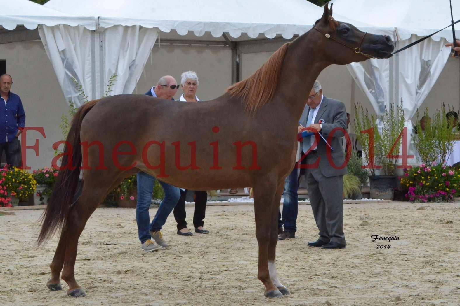 CHAMPIONNAT DE FRANCE 2014 A POMPADOUR - Notre Sélection - BADI'AH DE CARTHEREY - 15