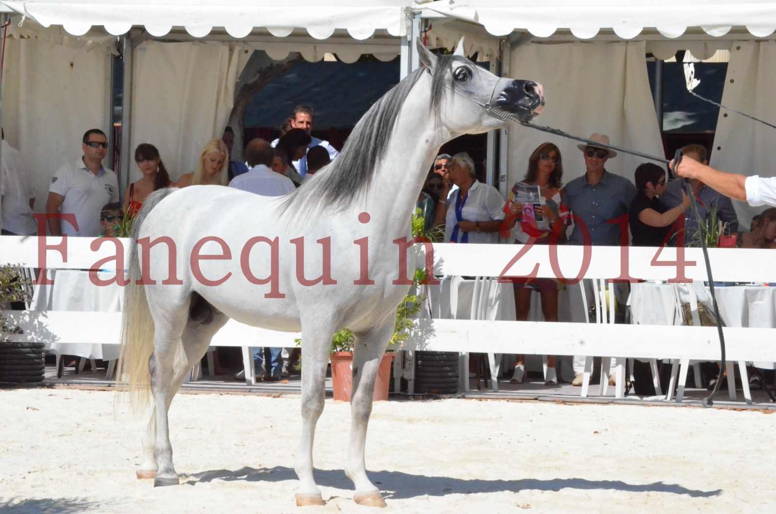 Concours National de Nîmes de chevaux ARABES 2014 - Sélection - SHAOLIN DE NEDJAIA - 82