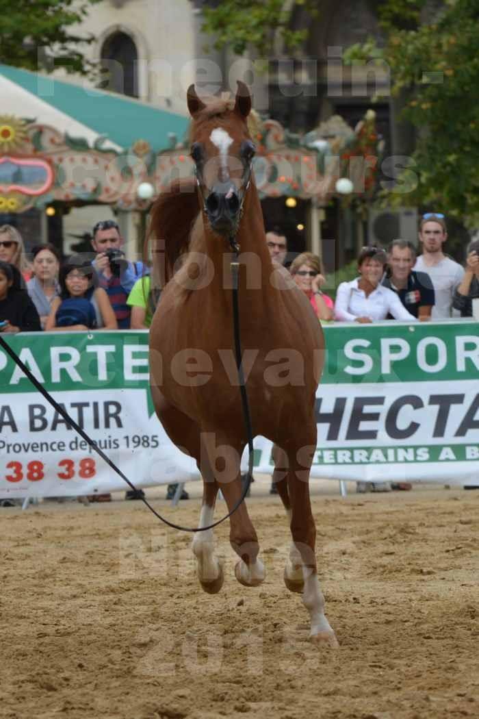 concours National de chevaux Arabes à Nîmes - les 12 & 13 septembre 2015 - 4