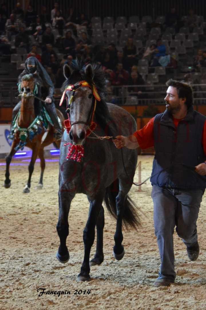 Show des races - Chevaux BARBE 15
