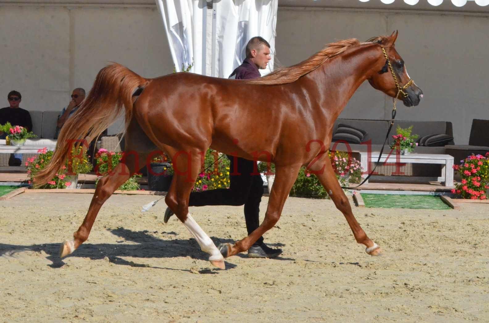 Championnat de FRANCE 2014 - Amateurs - SELECTO IBN SAMAWI - 044