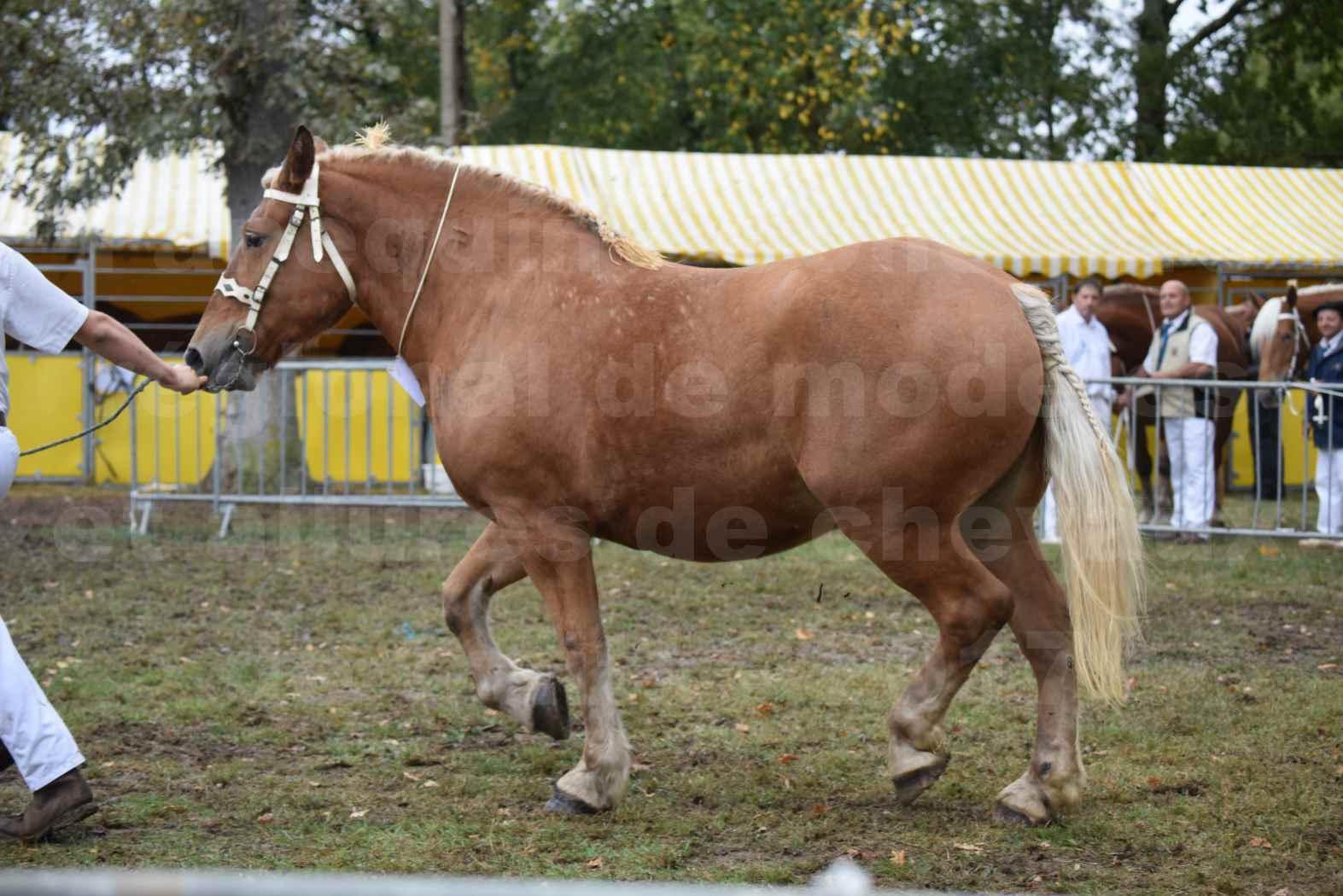 Concours Régional de chevaux de traits en 2017 - Pouliche Trait COMTOIS - EGLANTINE 28 - 11