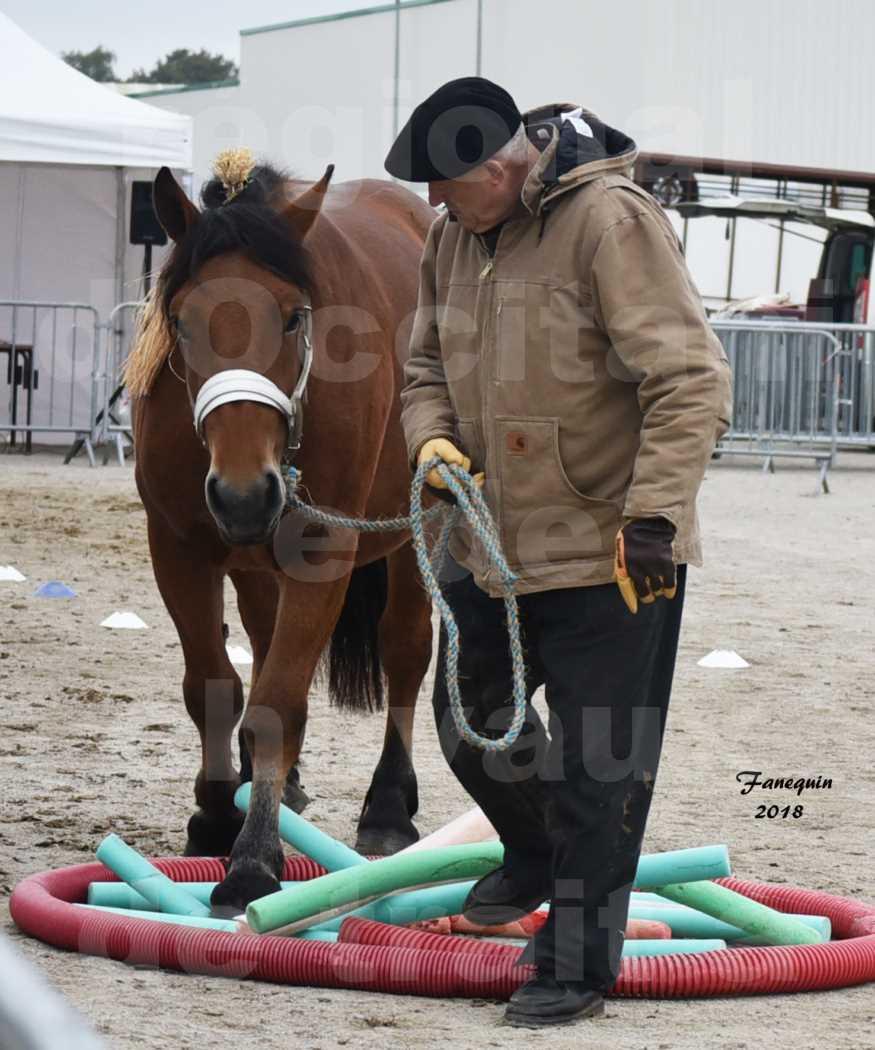Concours Label Loisirs lors du concours Régional de chevaux de traits à REQUISTA en Octobre 2018 - GAULOISE ROUGE