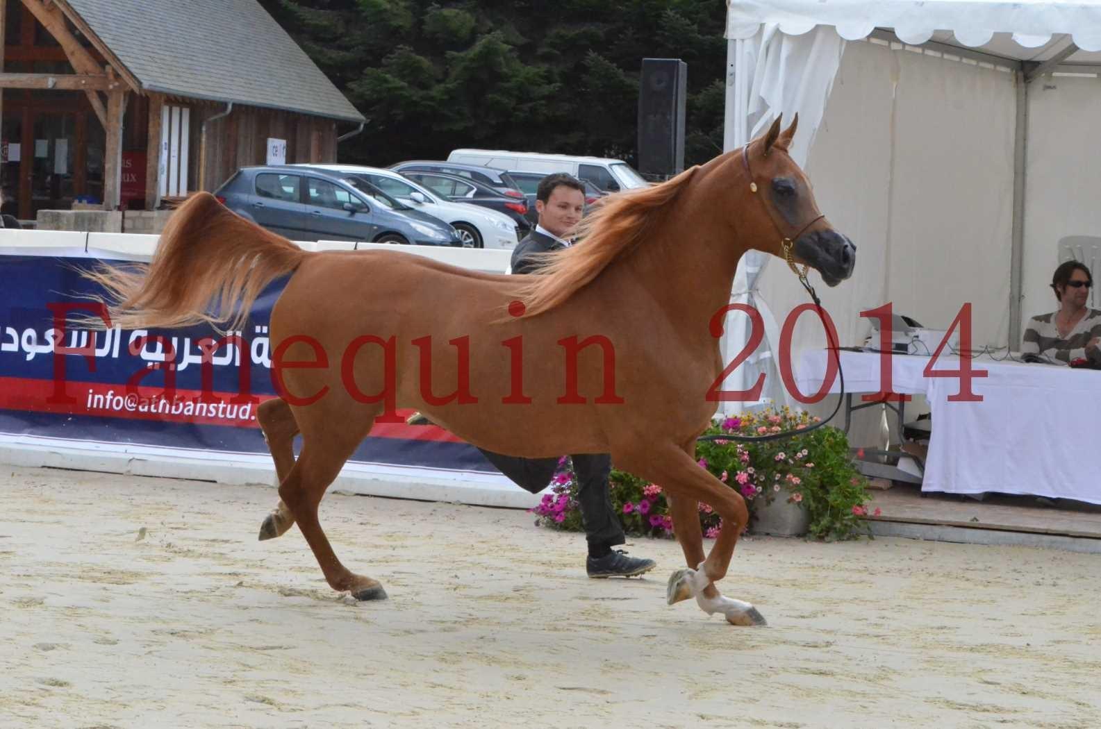CHAMPIONNAT DE FRANCE 2014 A POMPADOUR - Sélection - LUTFINAH JA - 10
