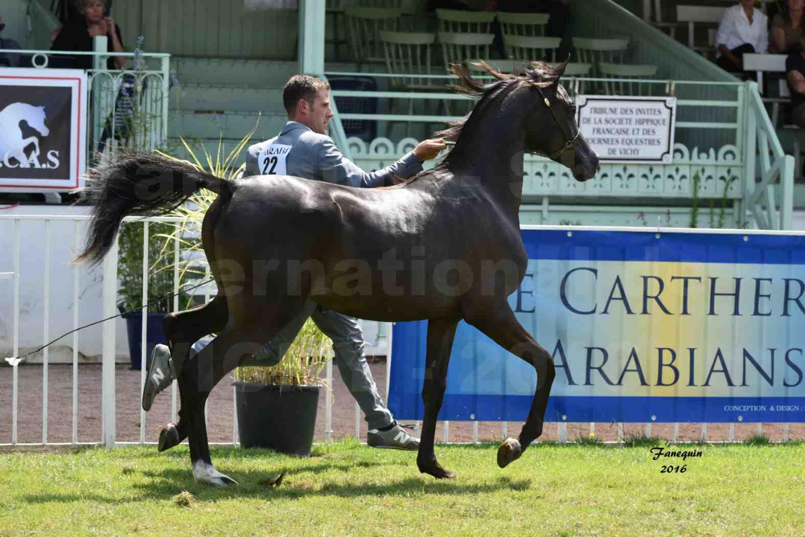 International Arabian Horse Show B de VICHY 2016 - ANNALISA ALIH - Notre Sélection - 4