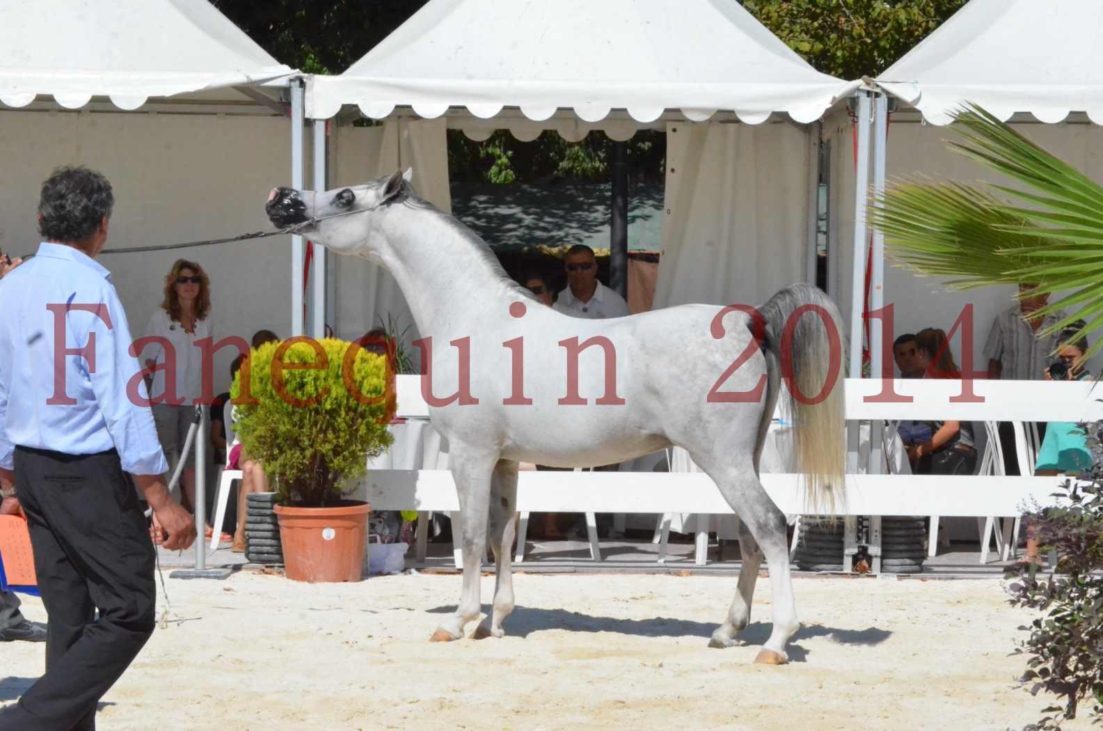 Concours National de Nîmes de chevaux ARABES 2014 - Sélection - SHAOLIN DE NEDJAIA - 68