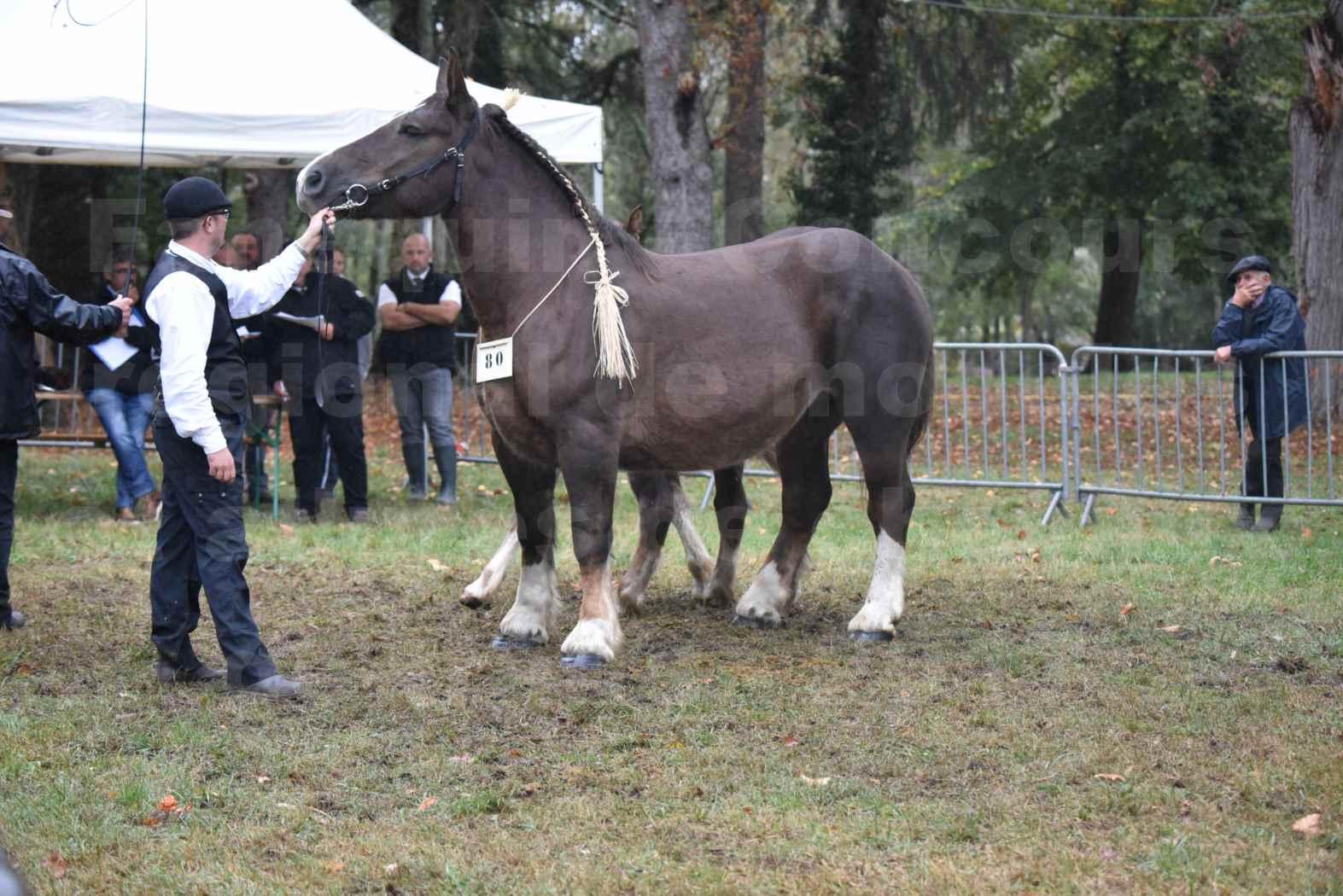 Concours Régional de chevaux de traits en 2017 - Jument & Poulain Trait BRETON - DIANE 18 - 25
