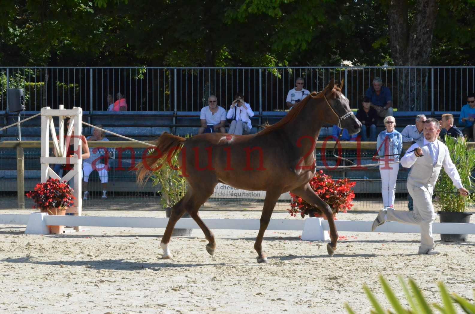 Championnat de FRANCE 2014 - Amateurs - LAMAL - 28