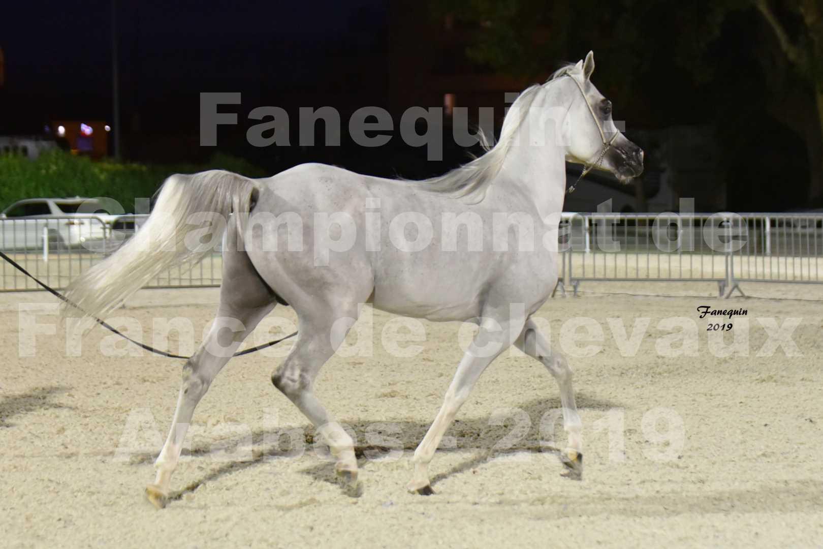 Championnat de France des chevaux Arabes en 2019 à VICHY - SHAMS EL ASHIRAF - 4